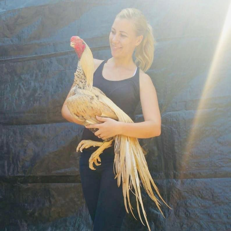Pin On Hens