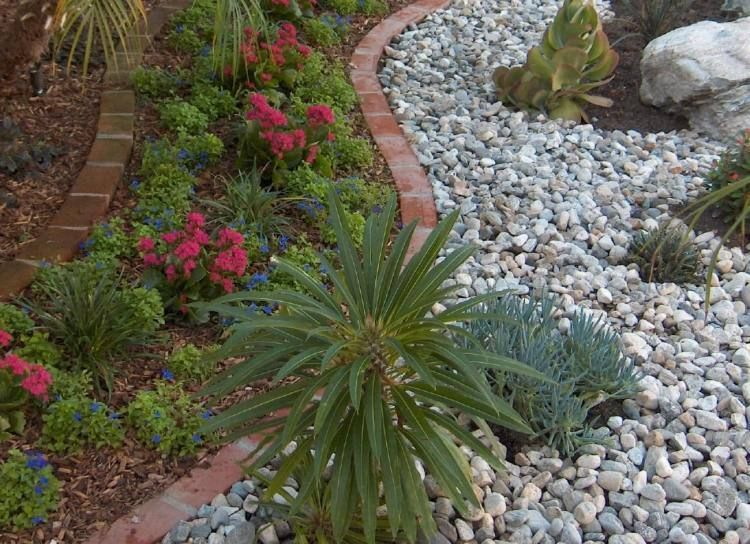 jardin sec avec quelques parterres de fleurs et plantes succulentes