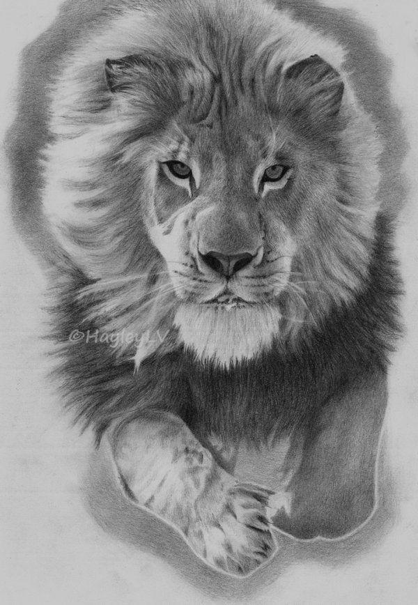 Lauva. by HayleyLV.deviantart.com on @deviantART | Animal ...