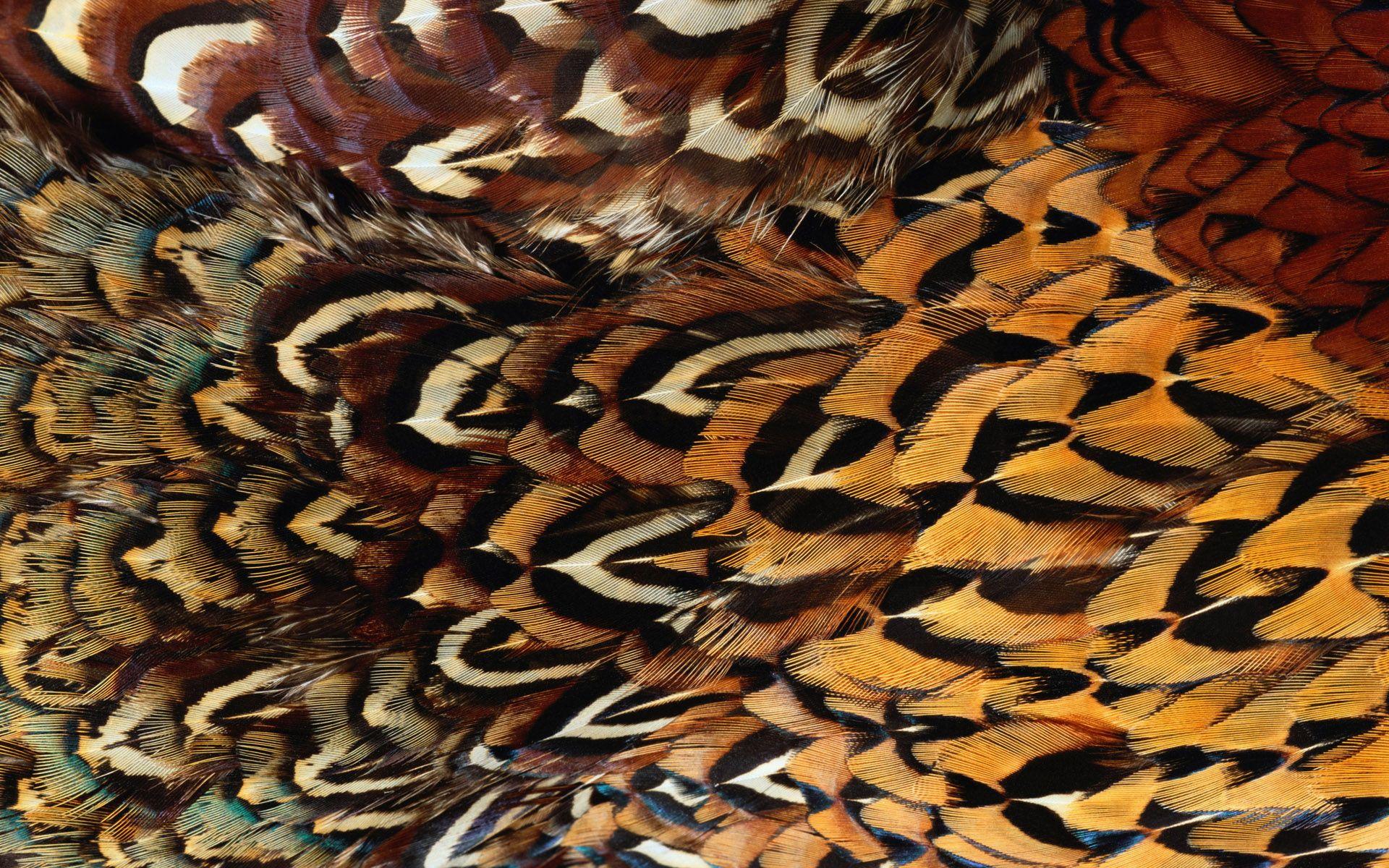 Animal fur texture Di Siji 9835 | motif transfert trace ...