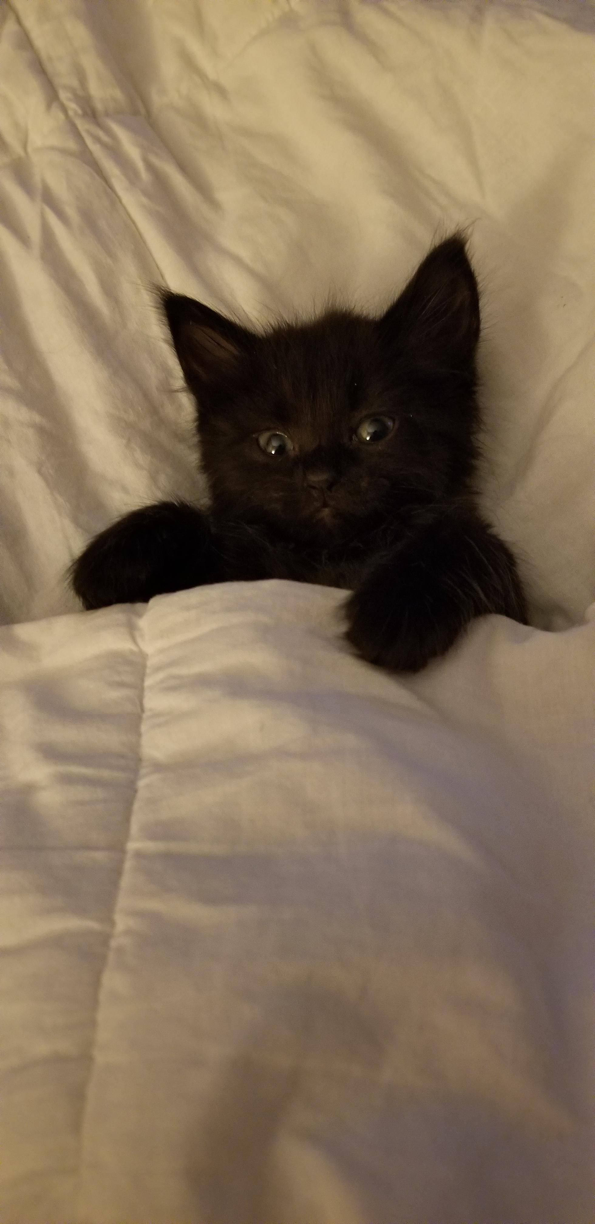 New Foster Kitten Loves To Be Tucked In Before Going To Sleep Kitten Love Foster Kittens Kitten