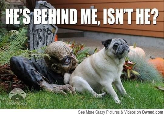 Halloween Funny Halloween Memes Funny Halloween Pictures