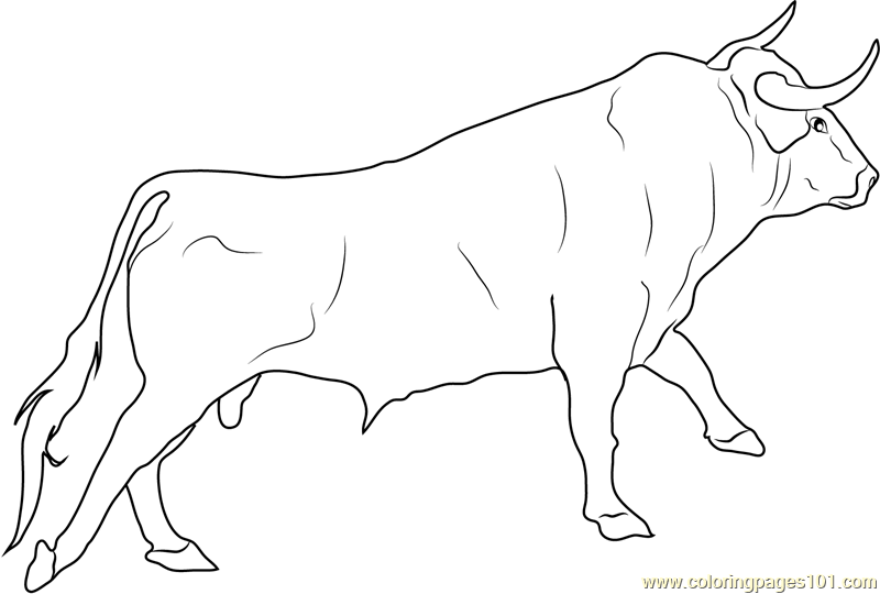 how to draw realistic cows | Spanish Fighting Bull Coloring Page ...