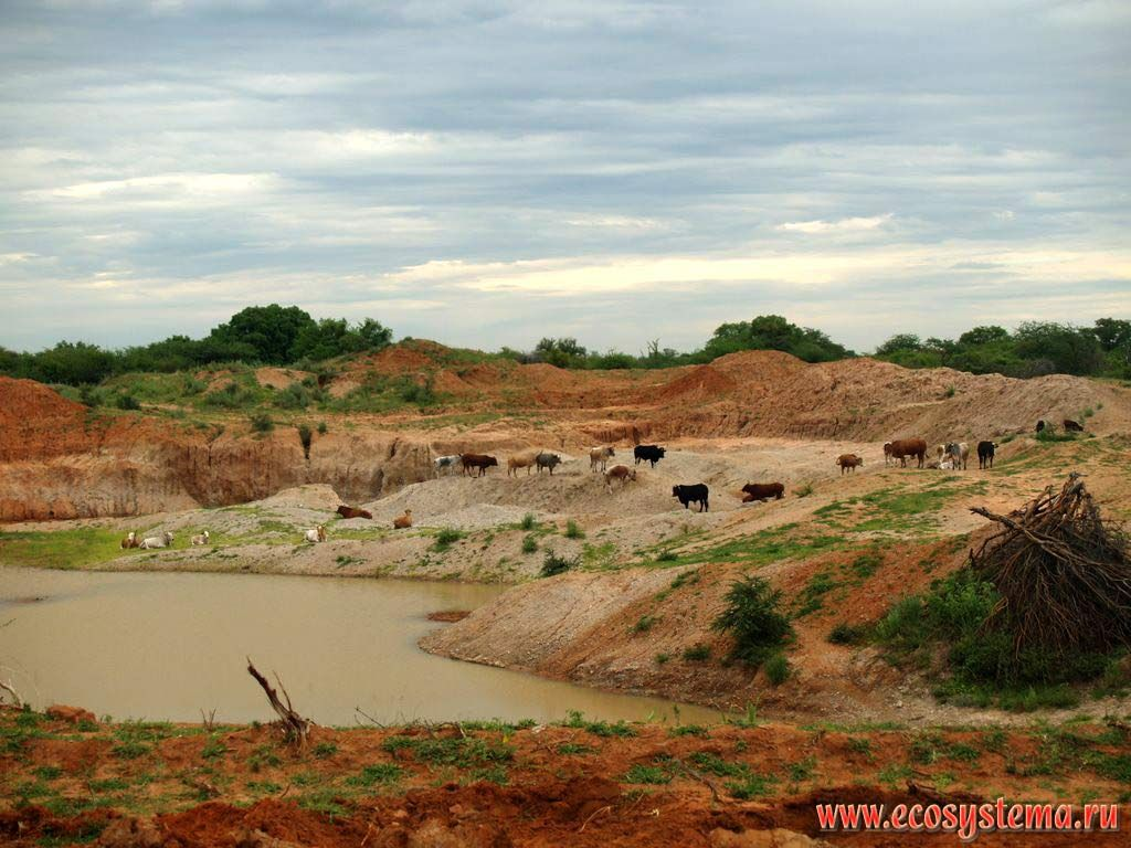 Sandygravel open pit surrounded by xerophytic tropical