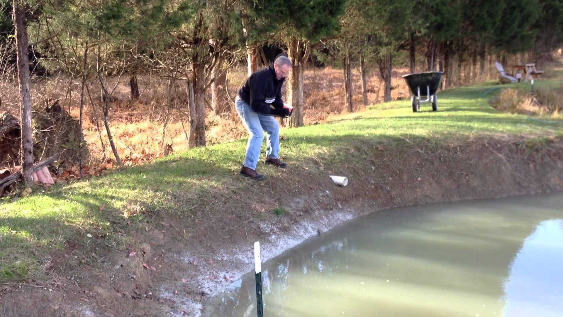 Spreading Bentonite To Fix Leaking Pond Ponds Backyard Pond Natural Swimming Pools