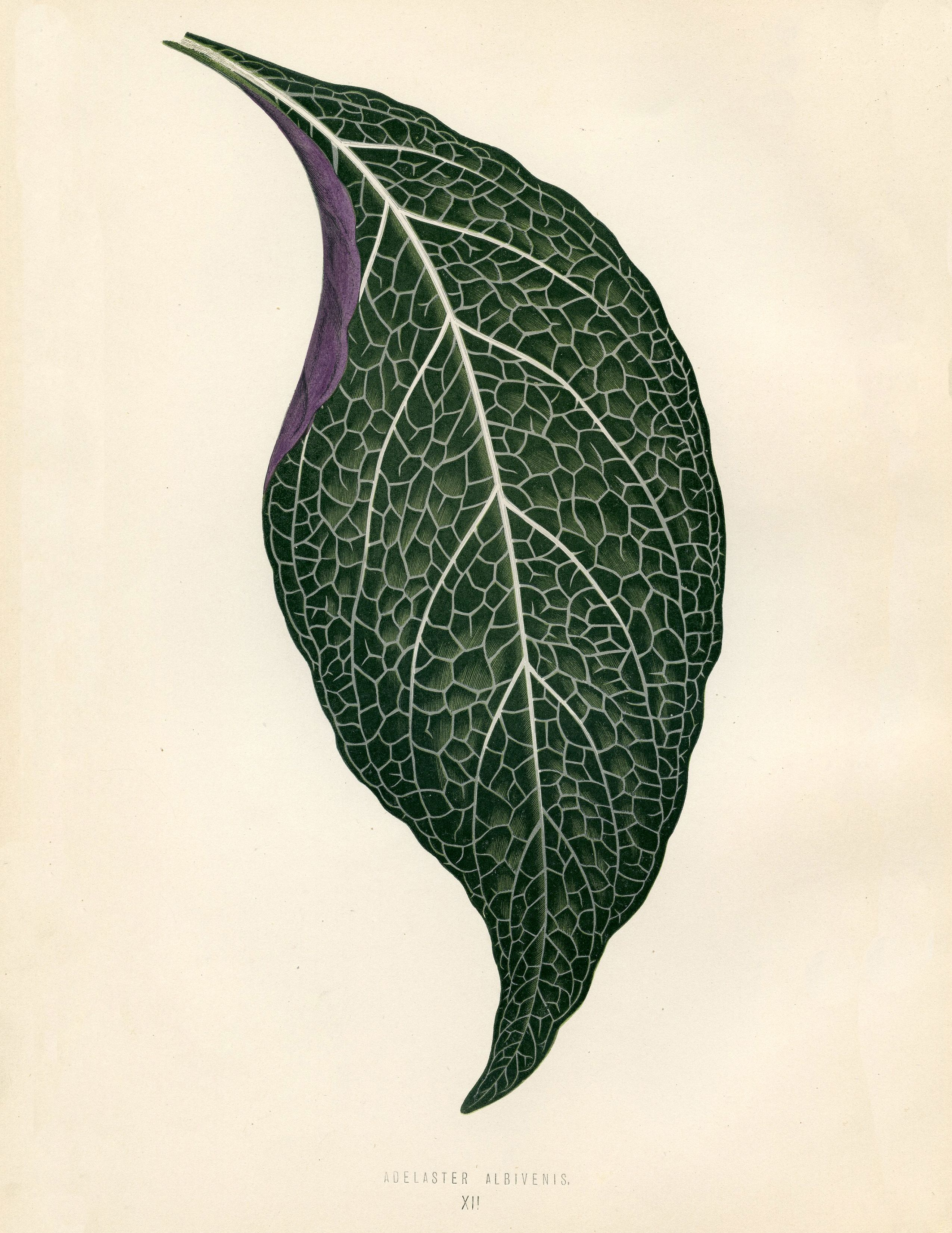10 Free Tropical leaves Printables!