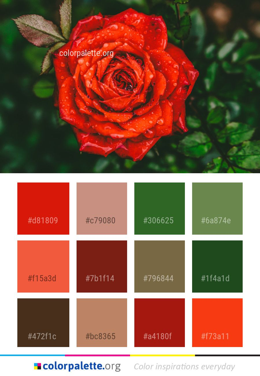 Red Rose Flower Color Palette Colors Inspiration Graphics Design Inspiration Beautiful Colorpalette Palettes Rose Flower Colors Red Rose Flower Color