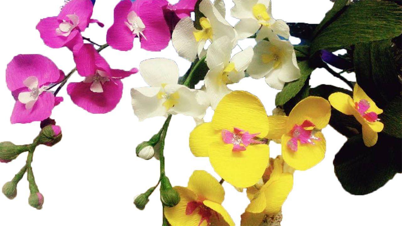 How to make orchids paper flowers u cách làm hoa lan hồ điệp từ giấy