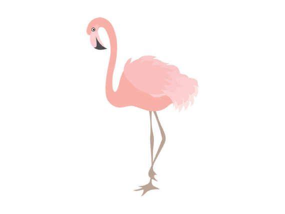 flamingo clipart digital flamingo bird exotic coral flamingo rh pinterest com flamingo clipart png flamingo clip art free