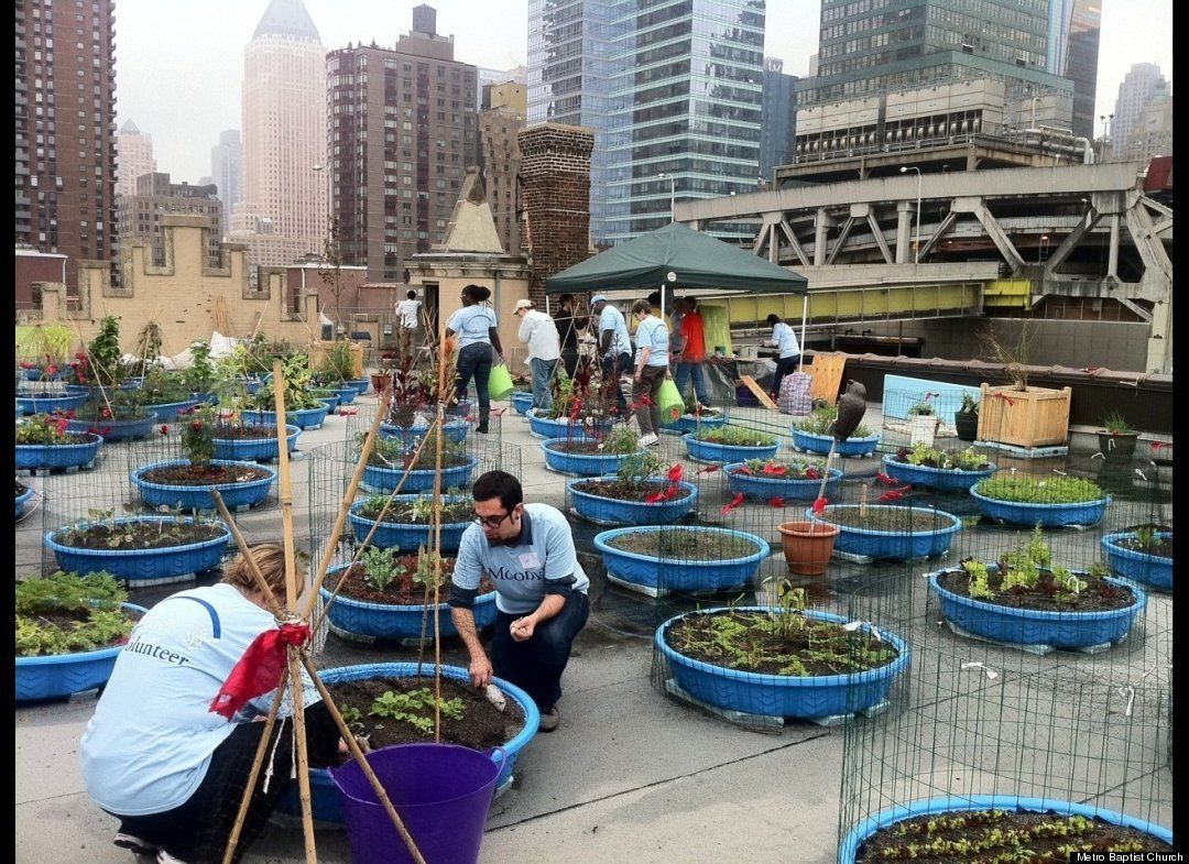 Photos Farming On Church S Roof Provides Food For A Hungry