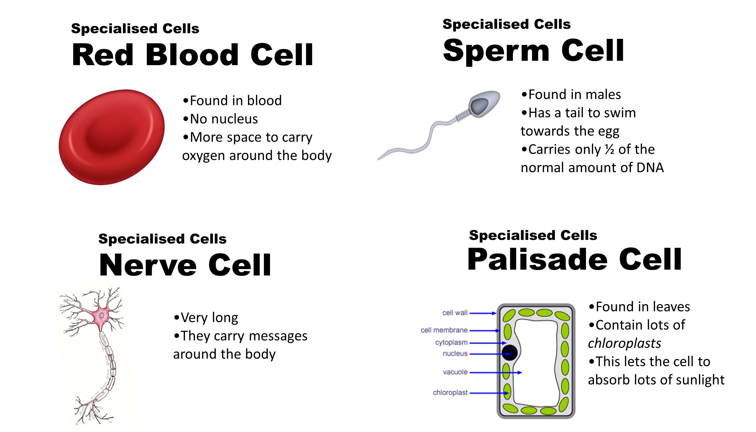 You tell cell membrane from a sperm cell possible