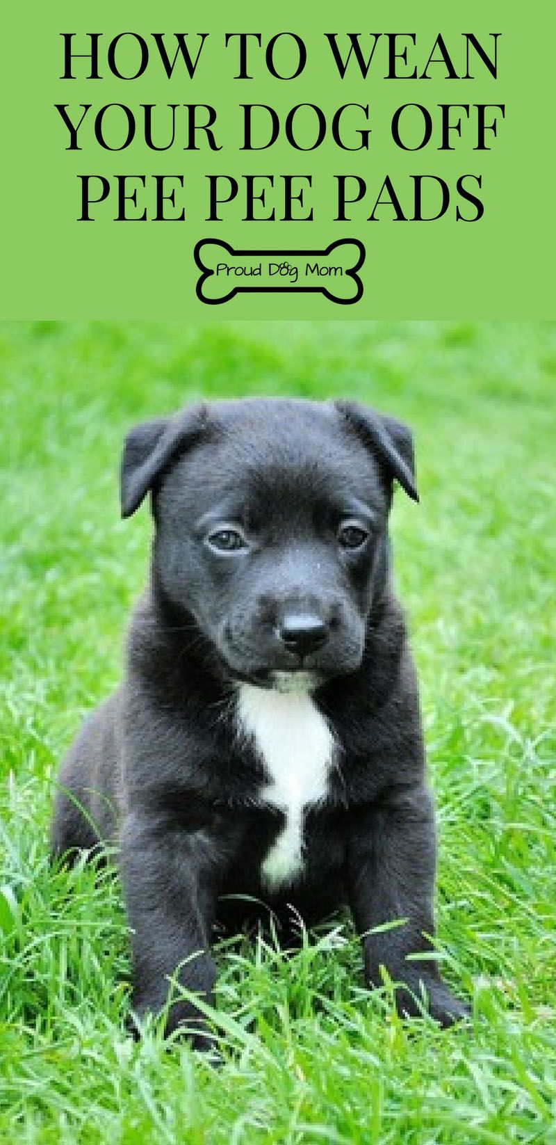 How To Wean Your Dog Off Pee Pee Pads Training your dog