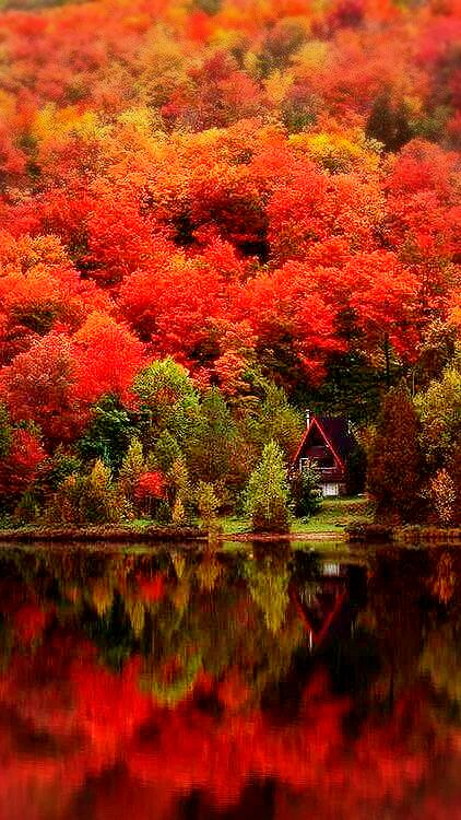 Quebec,Canada. From plus.google.com #autumnfoliage