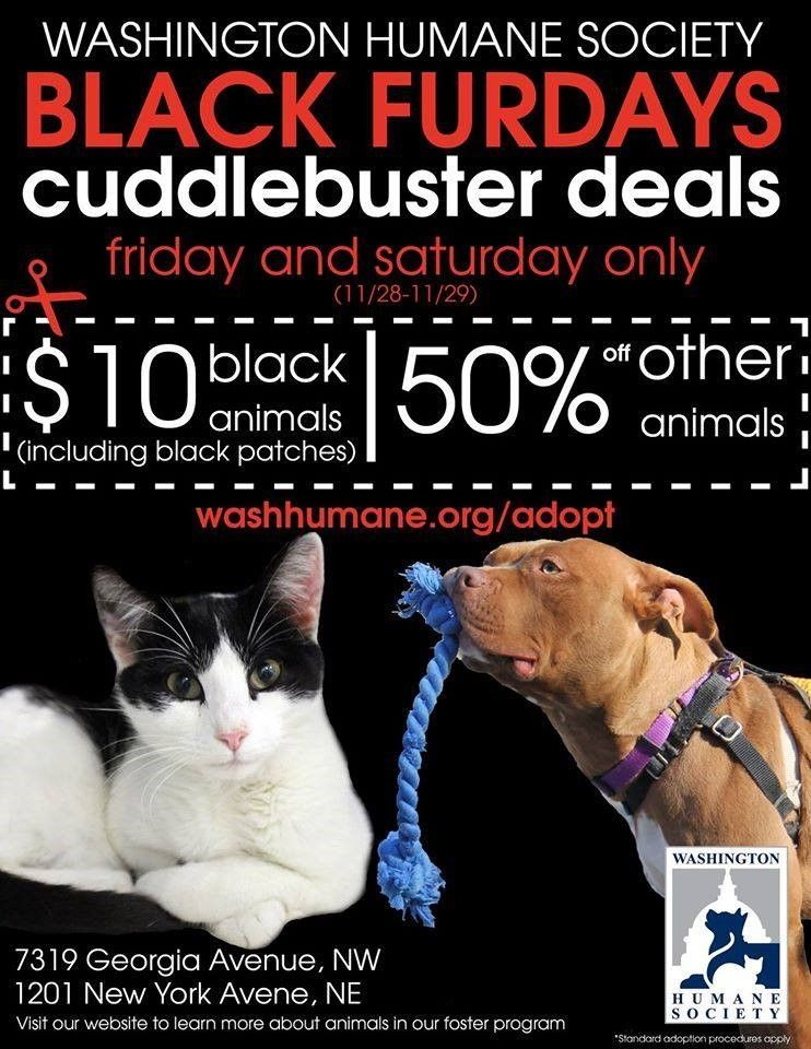 11 Ideas To Promote Your Shelter Animals On Black Friday Animal Shelter Animal Shelter Fundraiser Animal Shelter Adoption