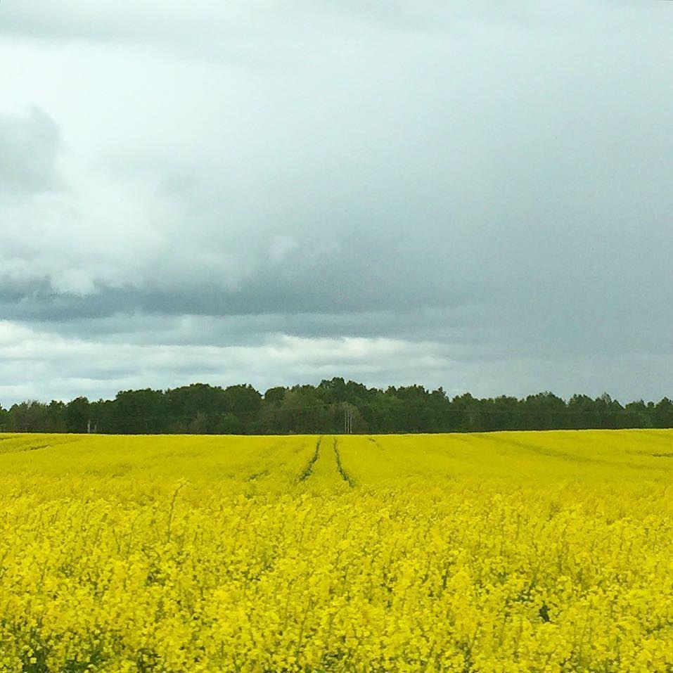 Tack för färgen bönder. #laholm #nature #nofilter
