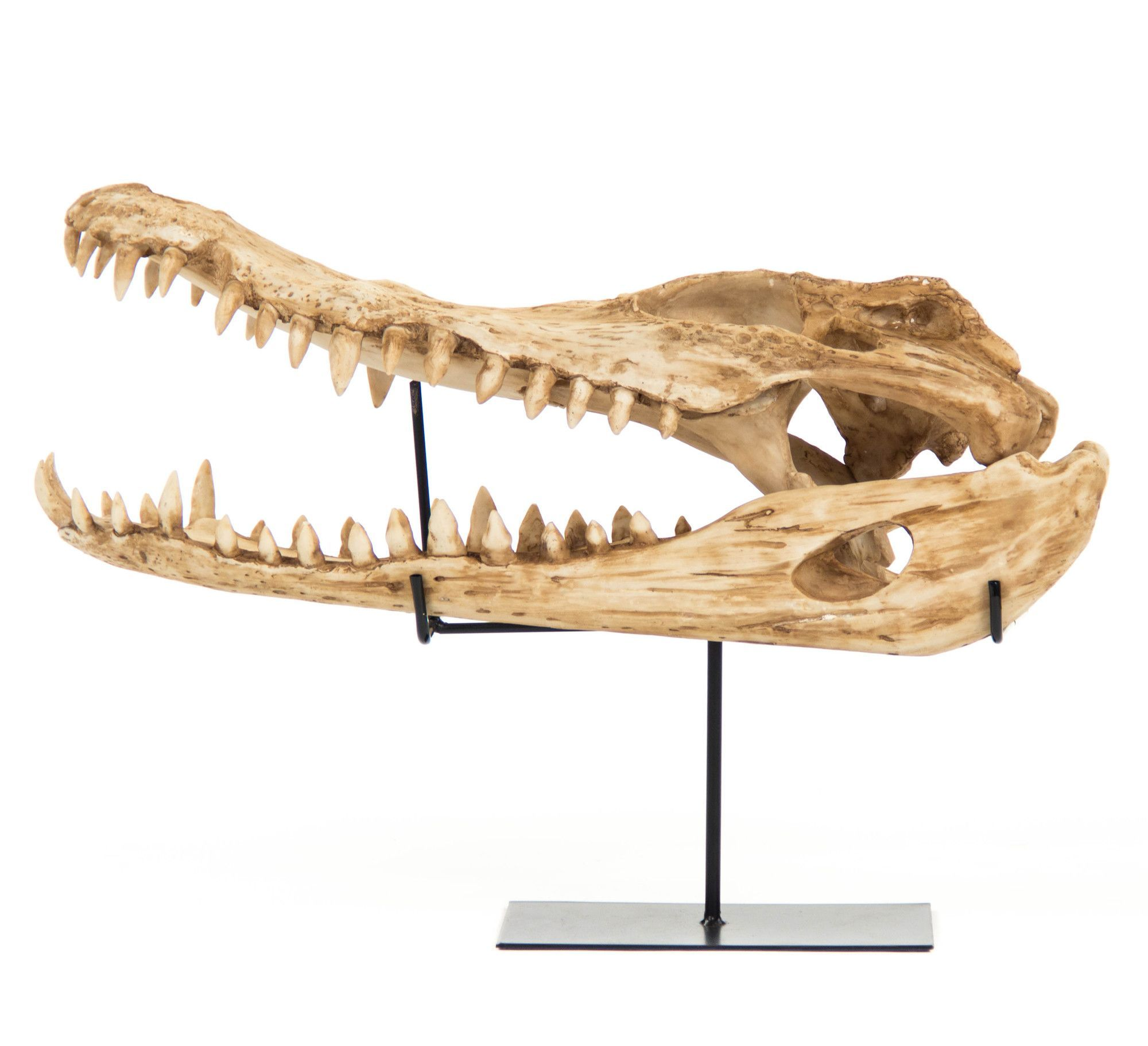 Alligator Skull With Base Wall Décor Decorative Sculpture Alligator Skull
