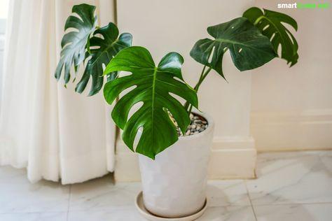 gute schlafzimmer pflanzen, besser schlafen mit zimmerpflanzen, für gute luft im schlafzimmer, Design ideen