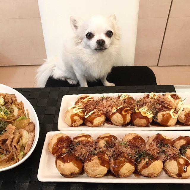 🐙タコパ🍻  #タコパ #今日の晩御飯 #おうちごはん #たこやき #焼きそば #パーティー #dinner #食べまくる #犬画像 #癒し犬 #いやしわんこ #ティーちゃん #ちわわ #チワワ #ロングコートチワワ #ロンチー #ホワイト #いぬ #愛犬 #ティアラ #いぬすたぐらむ #チワワ部 #chihuahua #longcoatchihuahua #white #lovely #dog #tiara #dogstagram #10ワン10色親バカ会