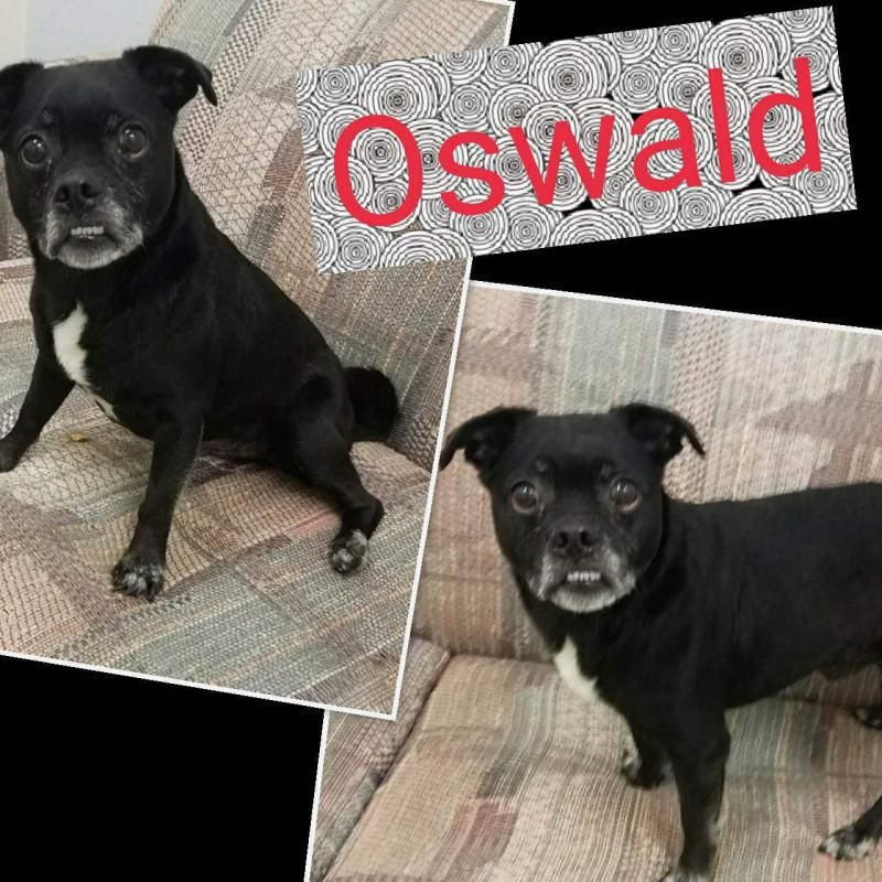 Adopt Oswald On Adoption Shelter Dogs Animals