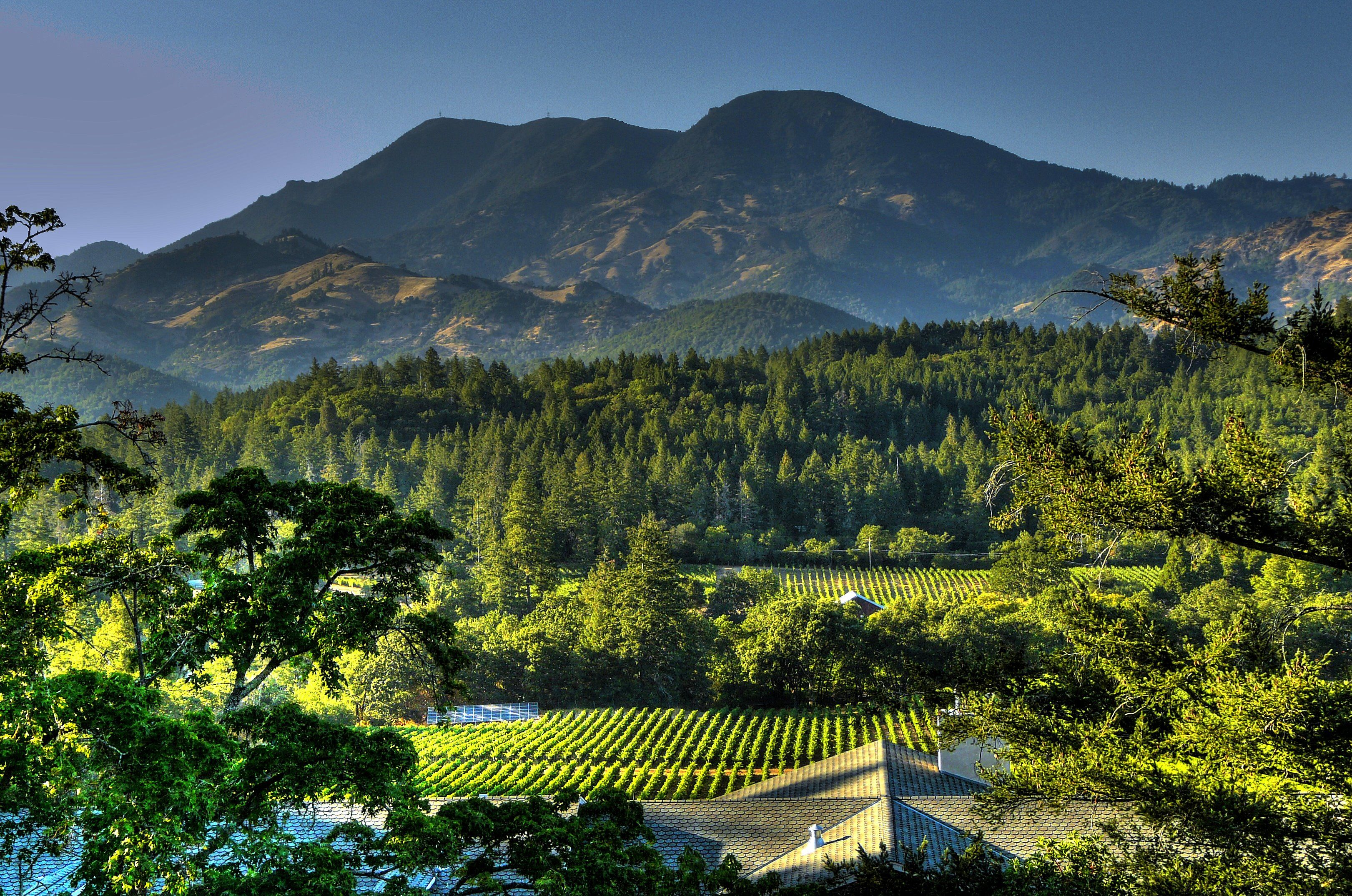 Pine Mountain in the back of a Vineyard landscape at ...