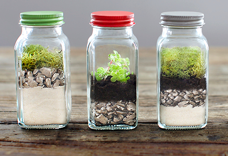 rhs miniature garden grower terrariums other tiny gardens to grow indoors out bunte. Black Bedroom Furniture Sets. Home Design Ideas