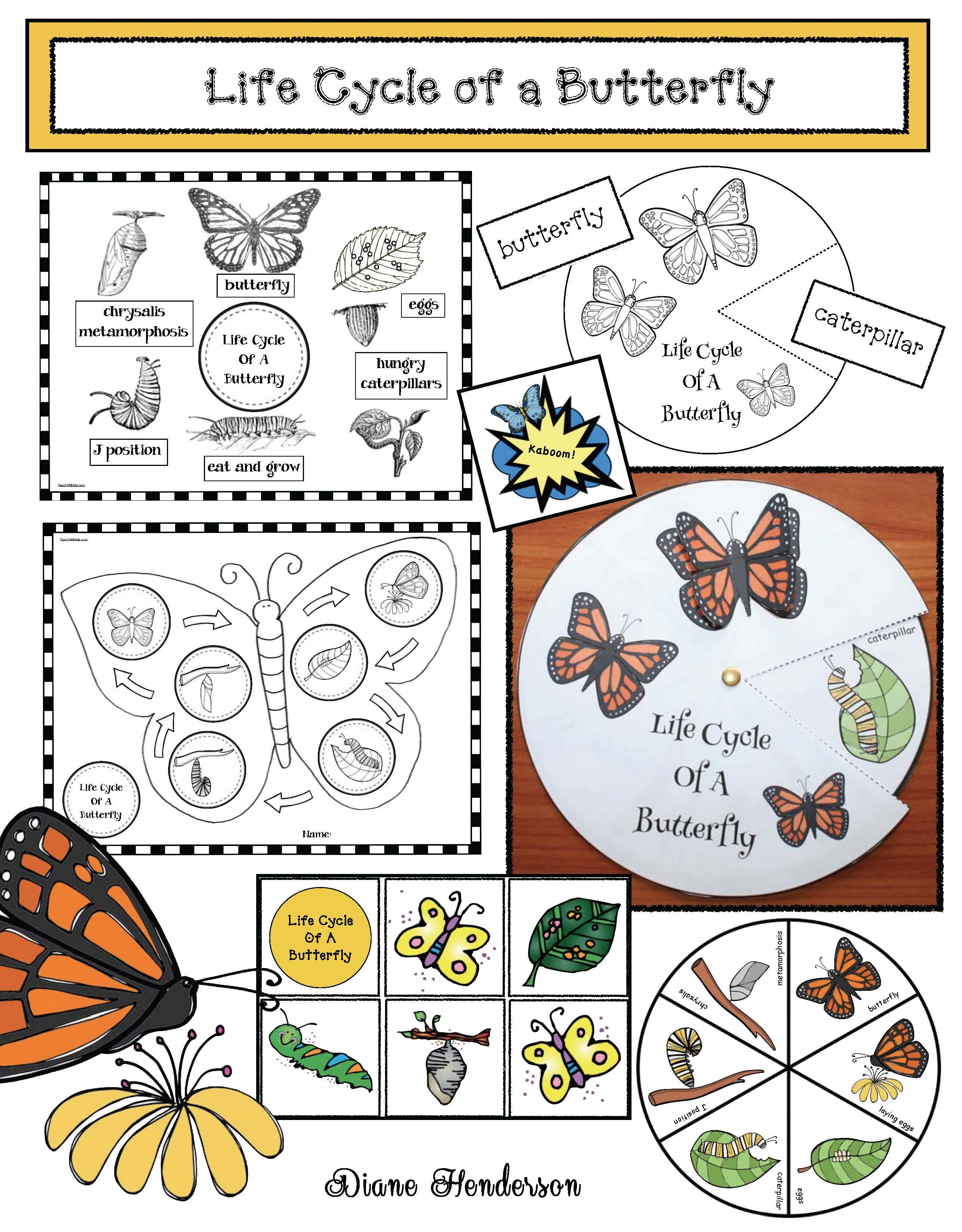 Caterpillar Butterfly Activities Life Cycle Of A