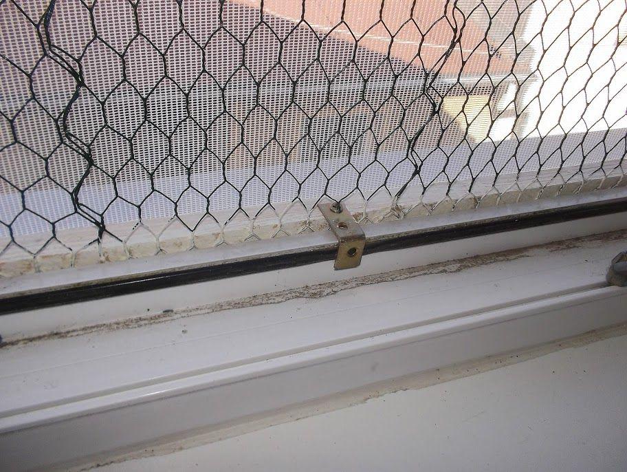 Gibt Es So Eine Art Fenstergitter Fur Wohnungskatzen Ohne Balkon Seite 2 Fenstergitter Wohnungskatzen Fenstersicherung