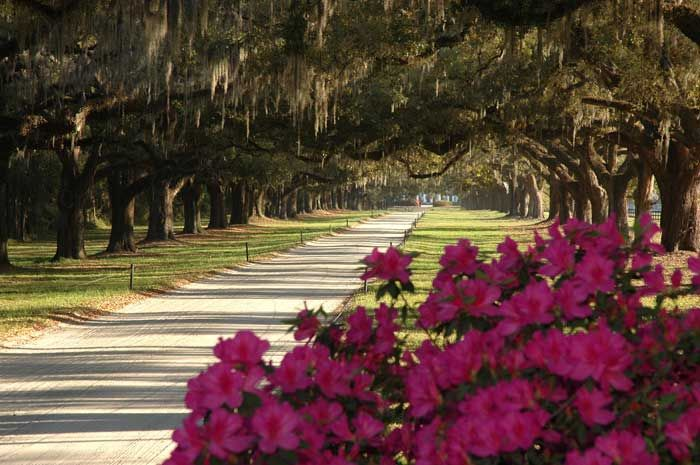 4128c6f8d2dd90bb60e77e86de94f264 - Boone Hall Plantation & Gardens Charleston Sc
