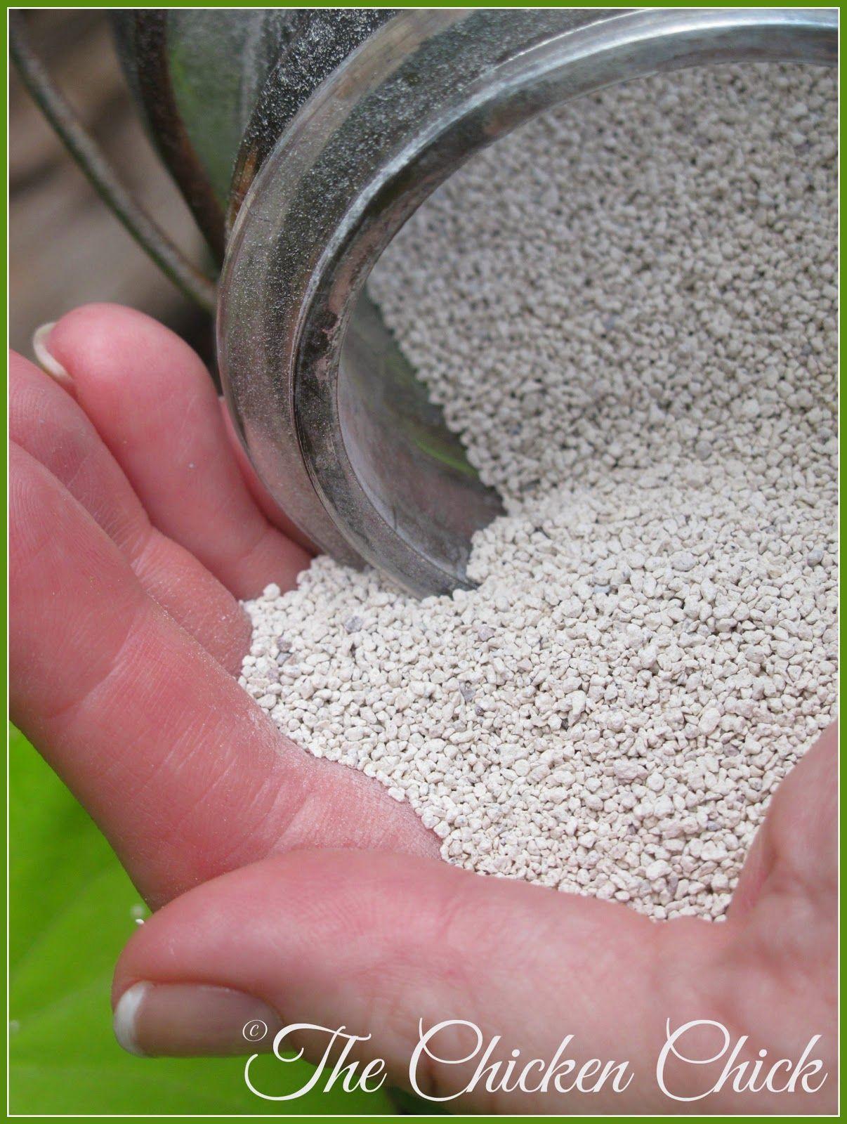 Chicken Coop Litter Sand, the Litter Superstar Chicken