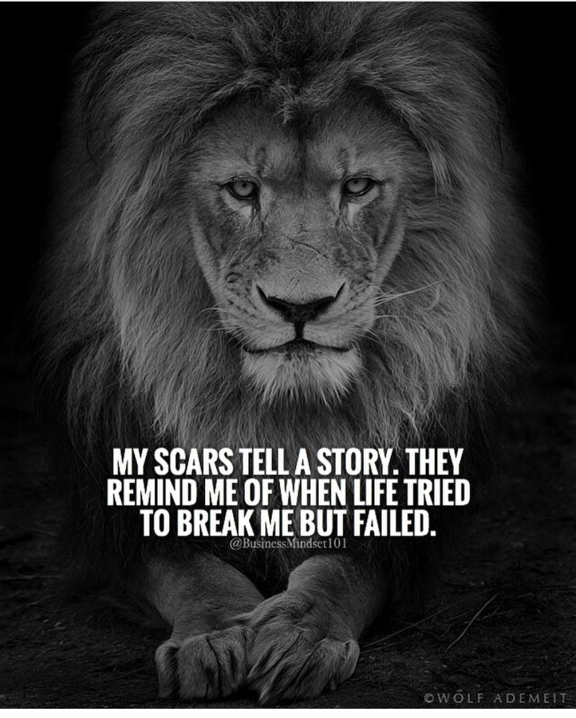 Motivational Quotes With Lion Images: Pin By Keith Moore On Finding Inspiration
