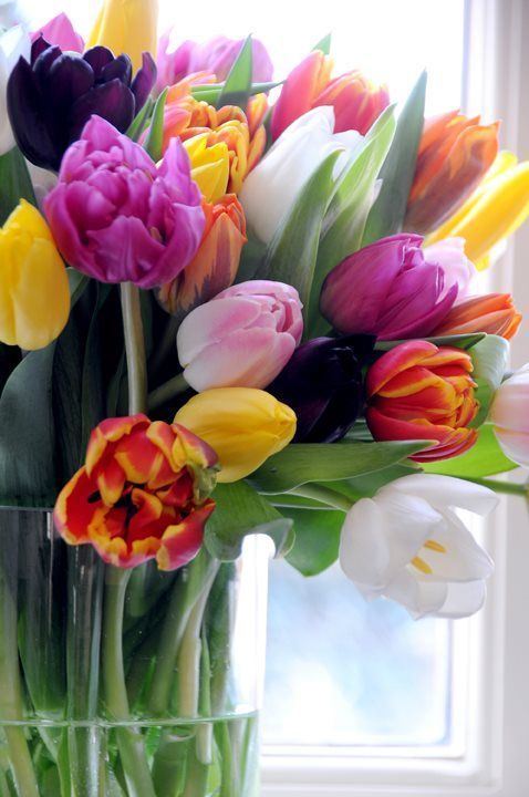 World Womans Day 2018 For Me Was To Get Tulips From A Woman As Thank For Caring For Her Child While She Had To Work Woma Tulips Flowers Spring Flowers Flowers