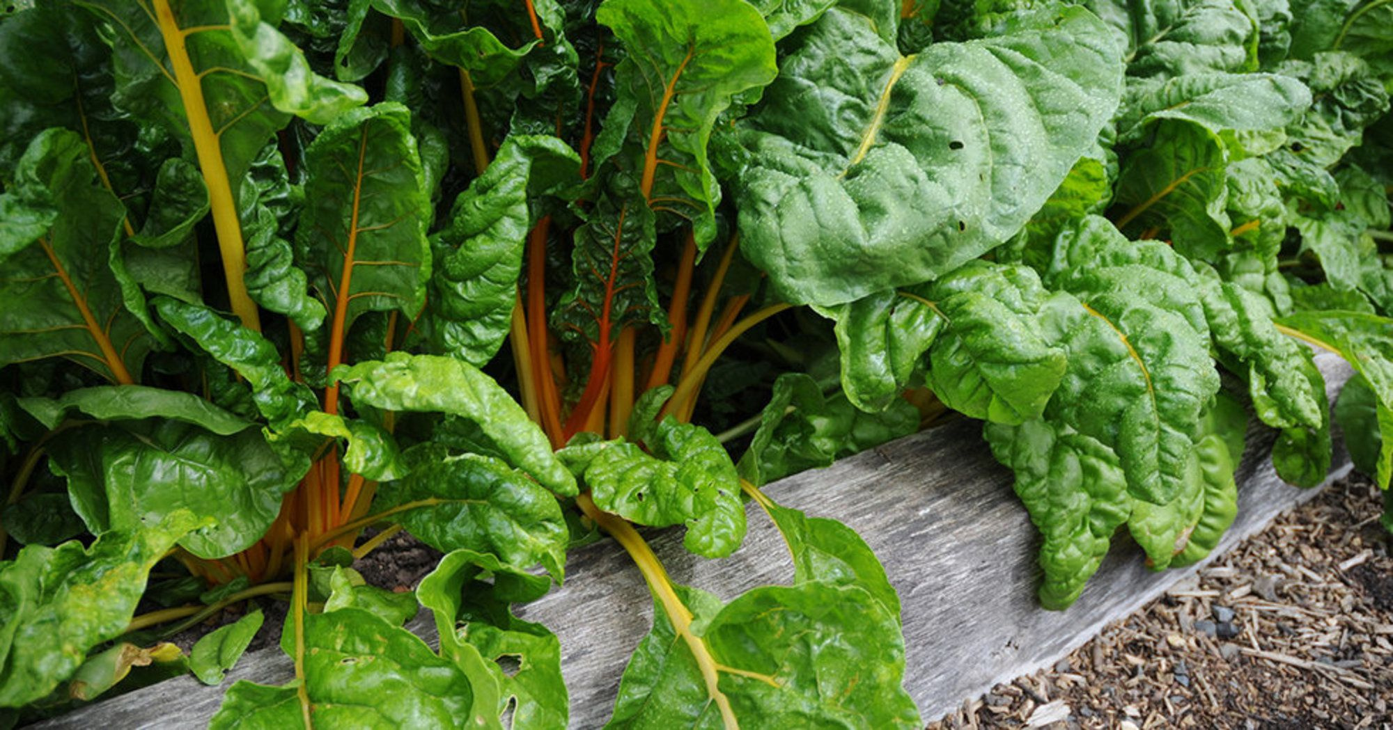 7 Crops to Plant This August Plants, Fall vegetables