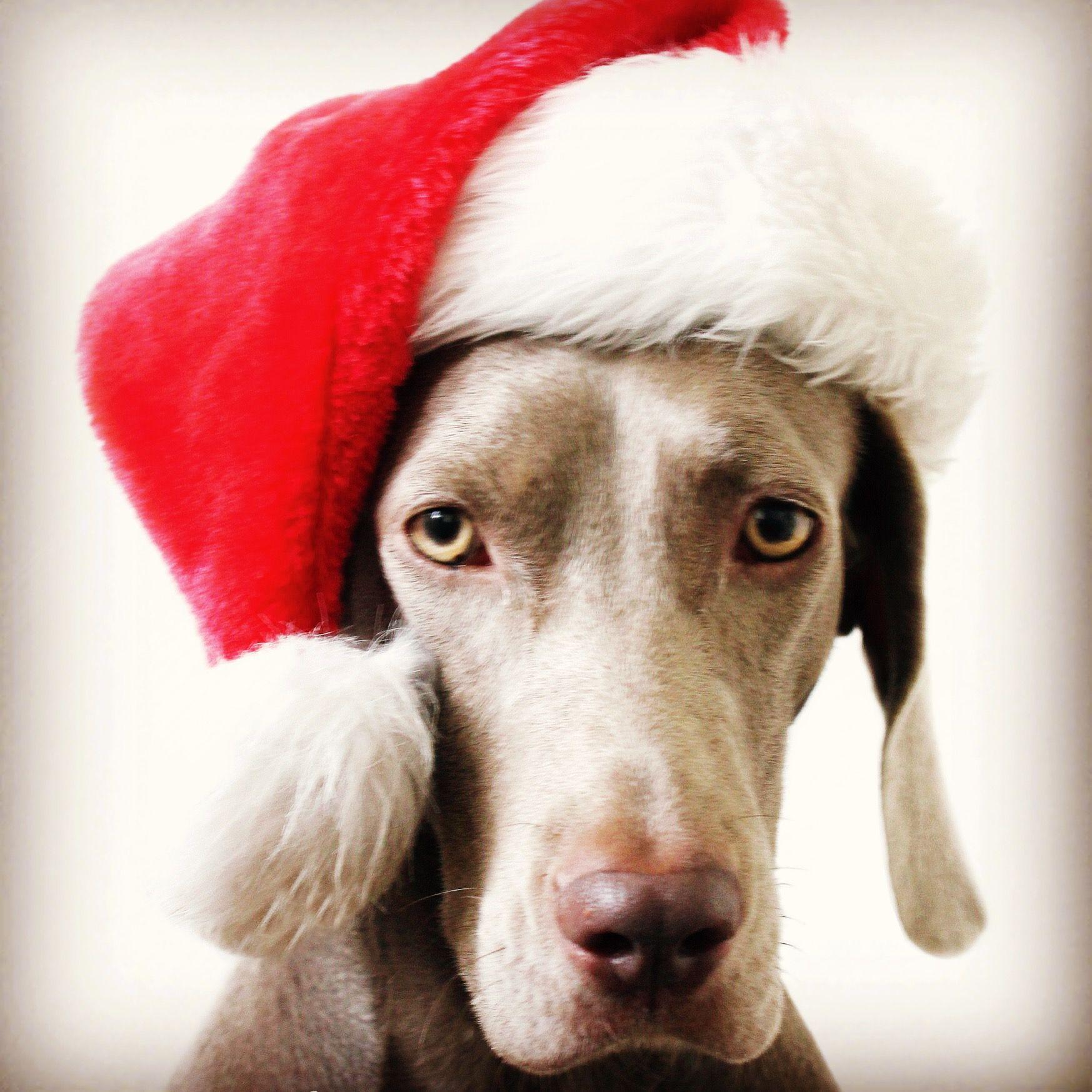Feeling Festive - A5 Christmas Card & Envelope Fineweim\'s shop on ...