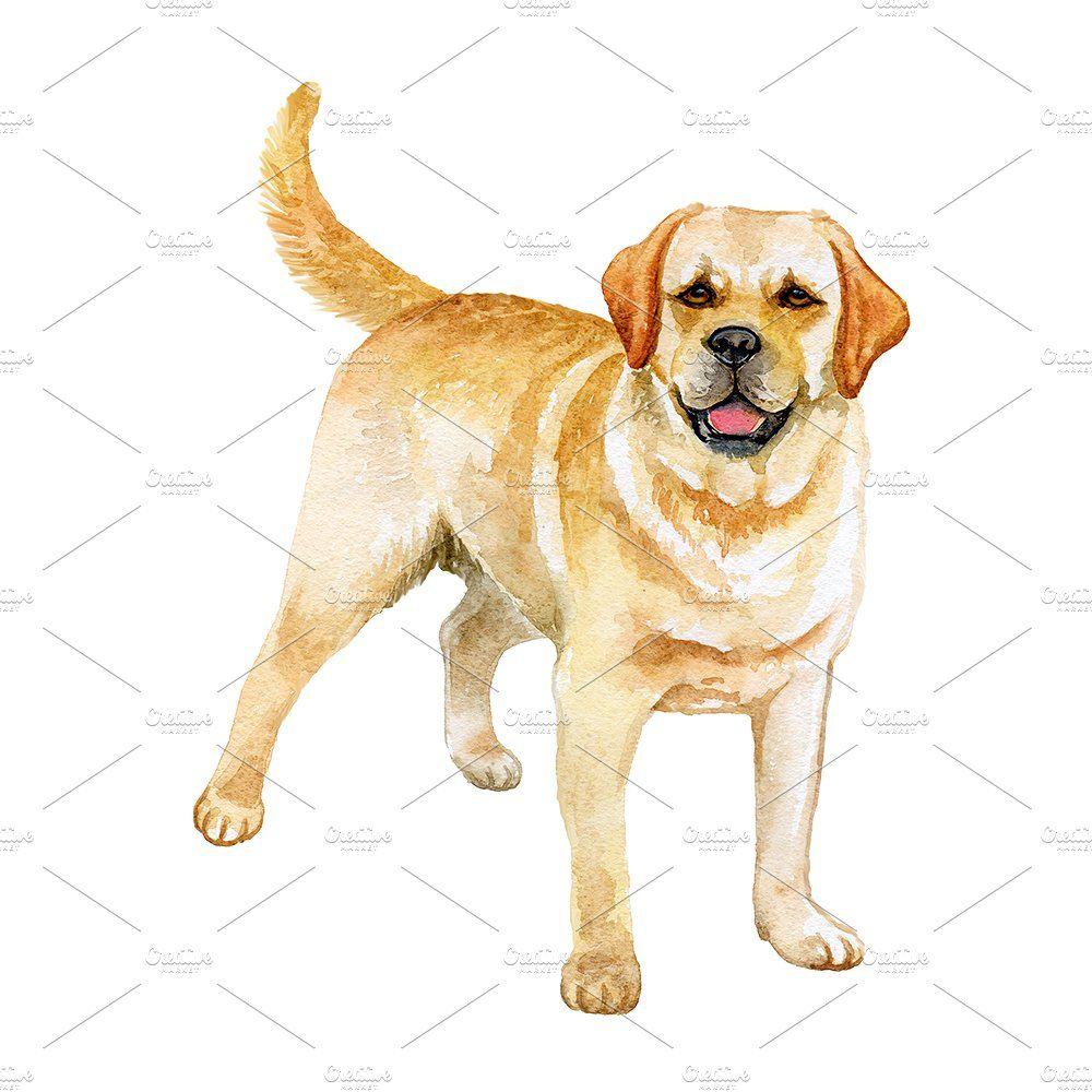 Watercolor Dogs Big Bundle Watercolor Dog Pembroke Welsh Corgi Papillon Dog