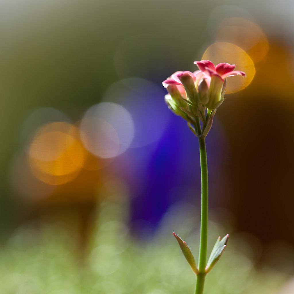 Pink and blue by macoupciantart things that make me smile 25 most beautiful flowers pictures izmirmasajfo