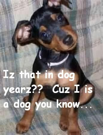 Is That In Dog Years? Cuz I is a dog you know...
