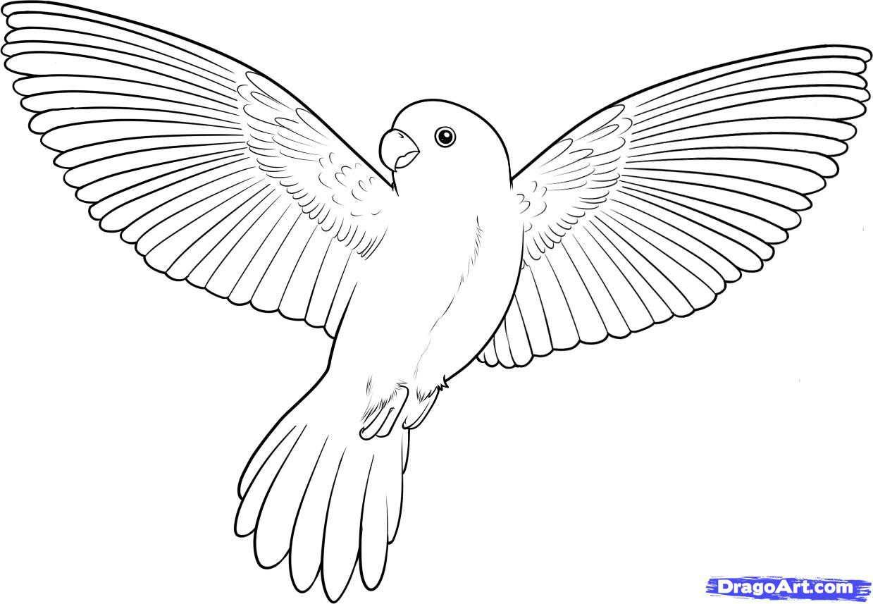 Coloring Pages Of Birds Flying Flying Bird Drawing Bird