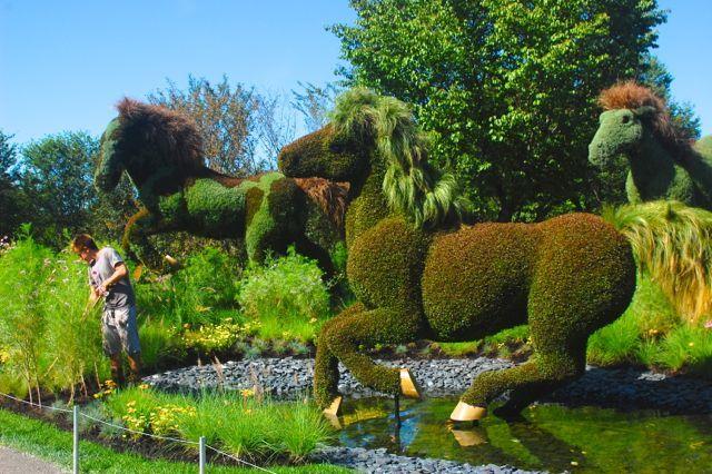 Topiary At Montreal Botanical Gardens   Graphic Ashen