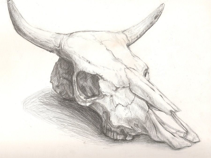 Bull Head Skull Drawing