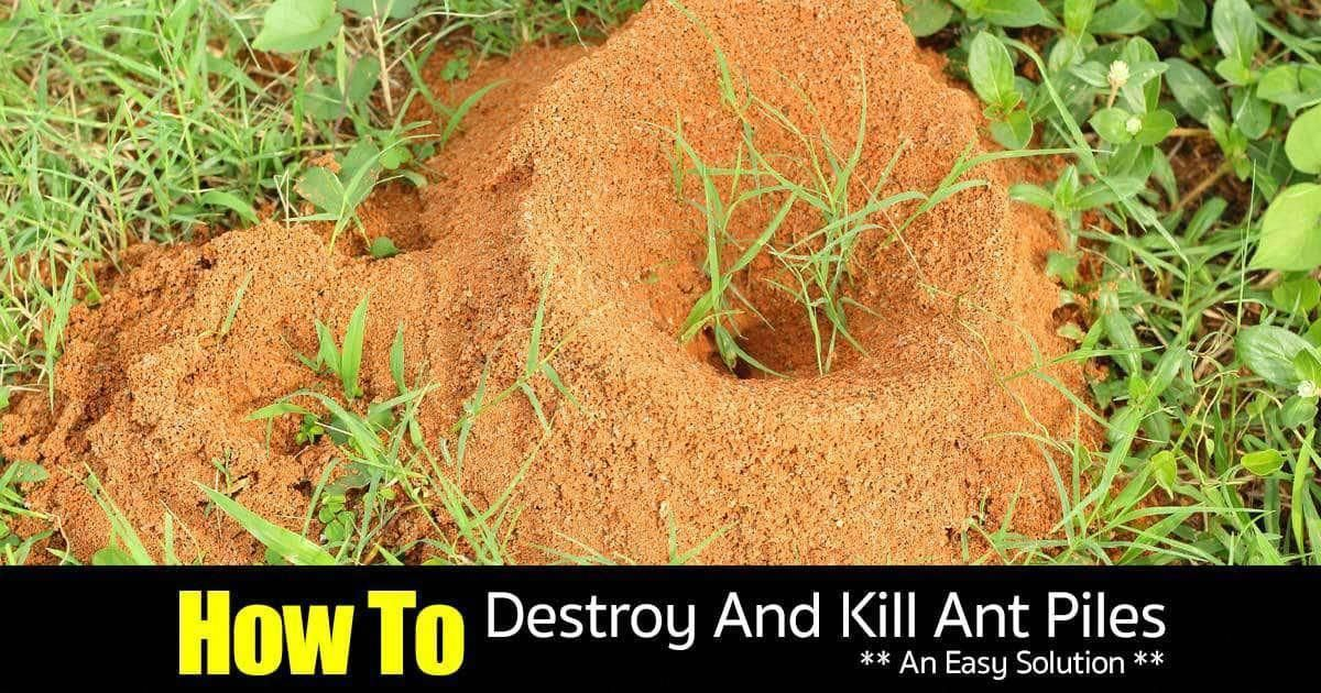 When The Rainy Season Starts Ant Piles Show Up After A Lot Of