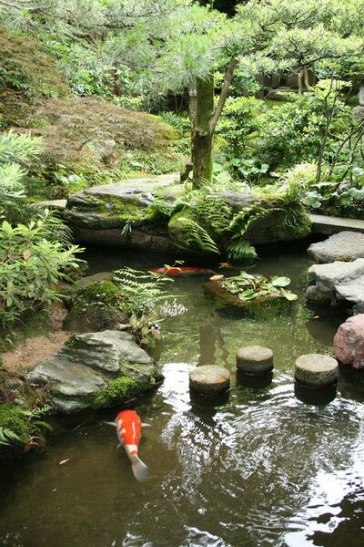 Beautiful koi fish ponds backyard water garden water for Koi pond japan