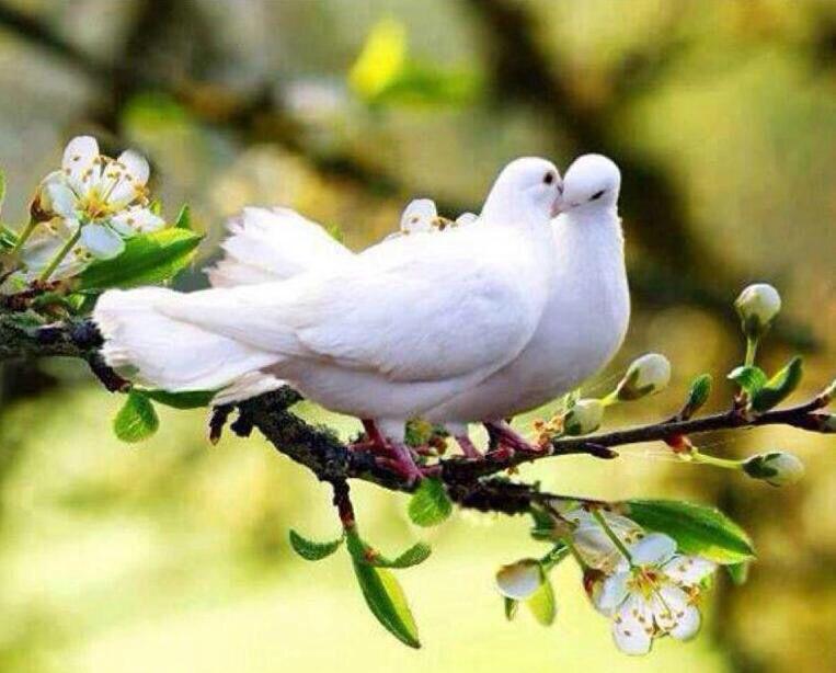 حمام زآجل في غيابگ صرت أشوف الح زن زاجل كل ما طيرته لـ صدري رجع تمنيتك Beautiful Birds Pet Birds Pretty Birds