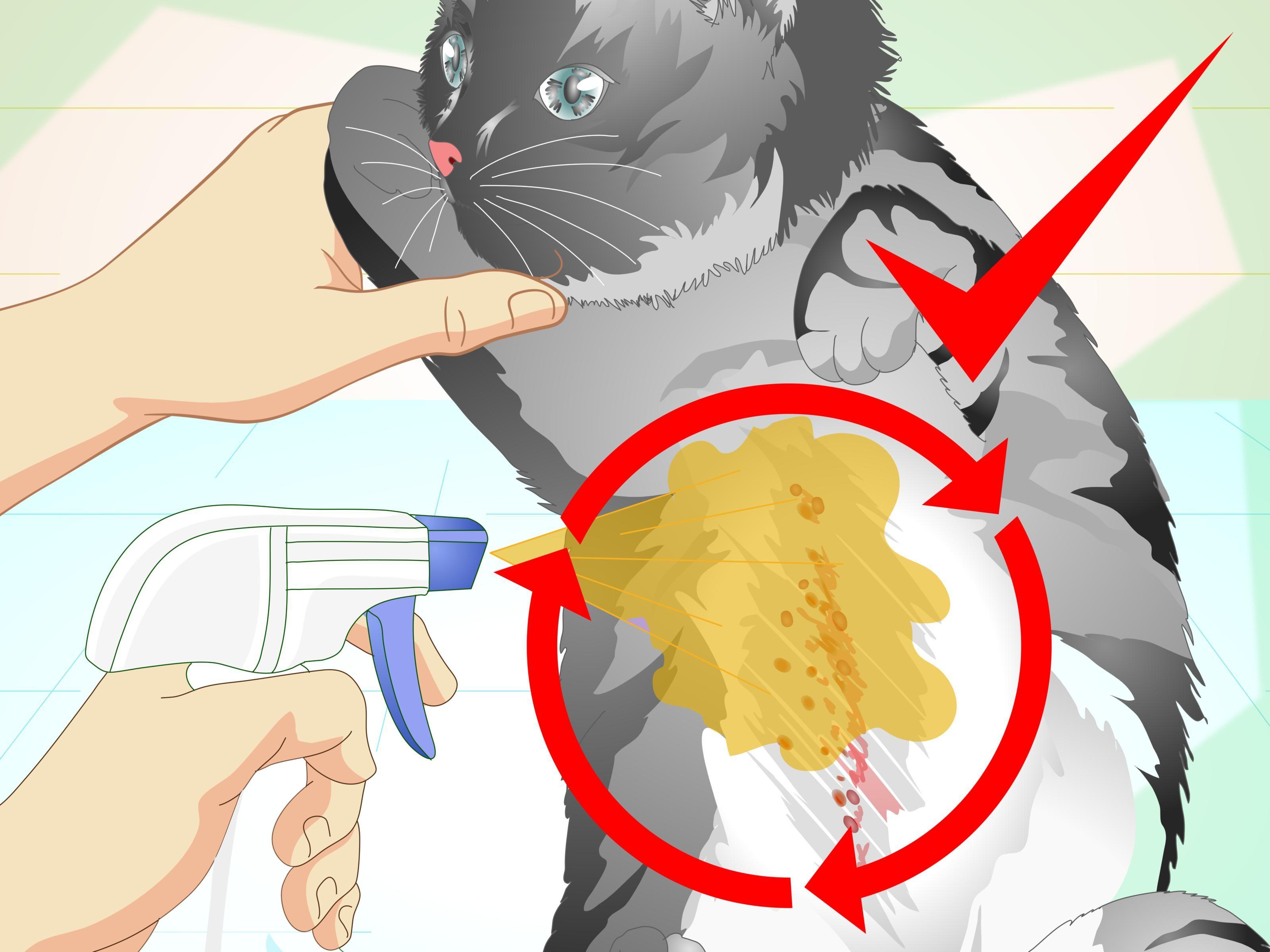 Make An Herbal Flea Remedy For Cats Flea Remedies Cat Fleas Treatment Dog Flea Remedies