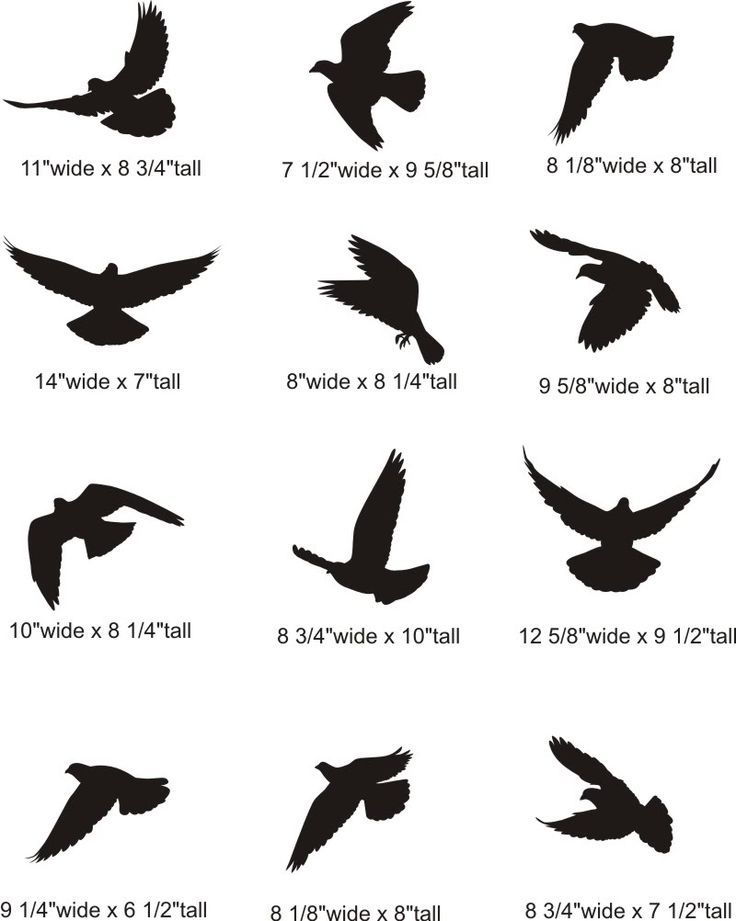 Silhouette Of Two Birds Flying Google Search Beauty Body Hair