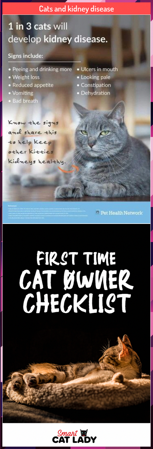 Cats and kidney disease WhyIsOralCareImportant