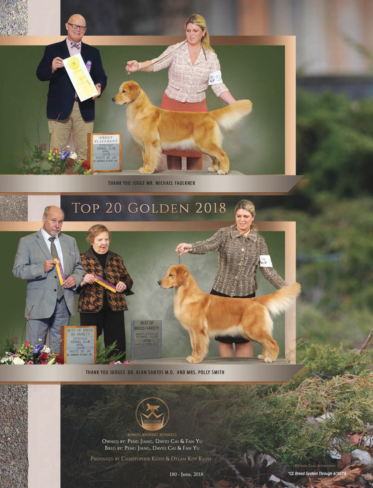 Am Gch Cnch Kingslanding S Eastern Heroine Dj 4 1 2016 Golden Retriever Golden Retriever Breeds Corgi