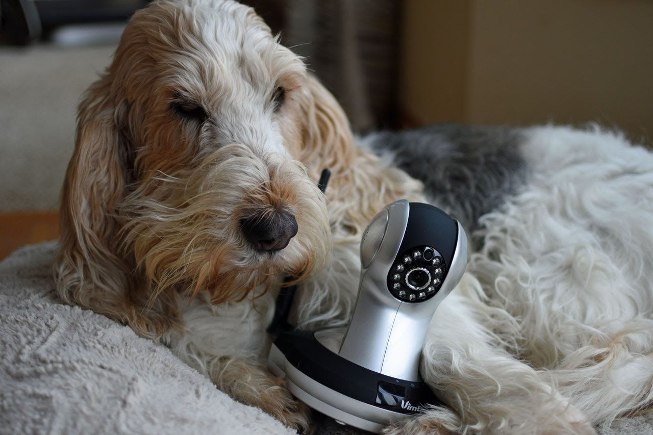 My Gbgv Life Caught On Camera Pets Home Alone Part 1 Find Out What Your Pets Are Up To When You Are Gone With The Vimtag Monit With Images