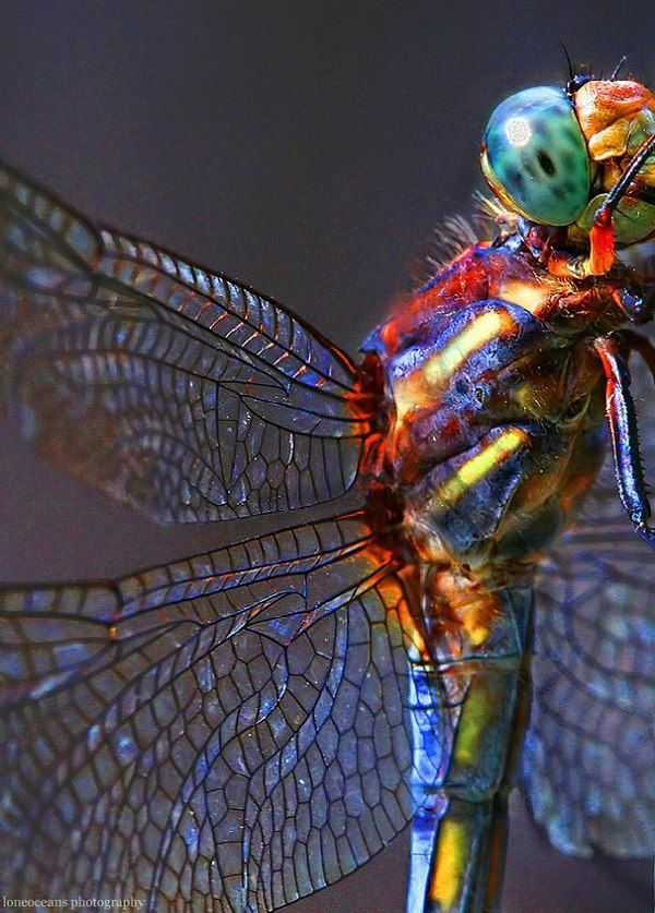 Dragonfly by Gao Guangyan