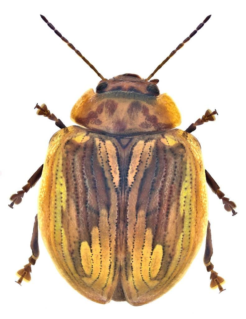 17++ Scarab beetle animal crossing ideas