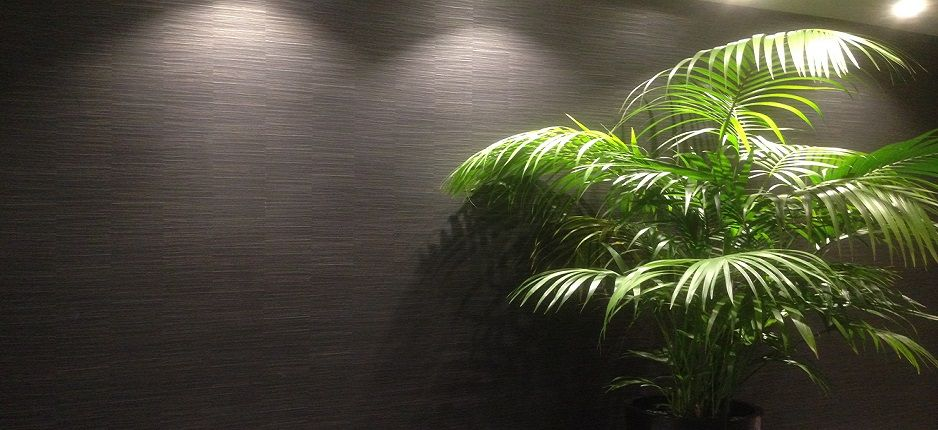 Black grasscloth wallpaper/ wallpaper installer Brisbane ...